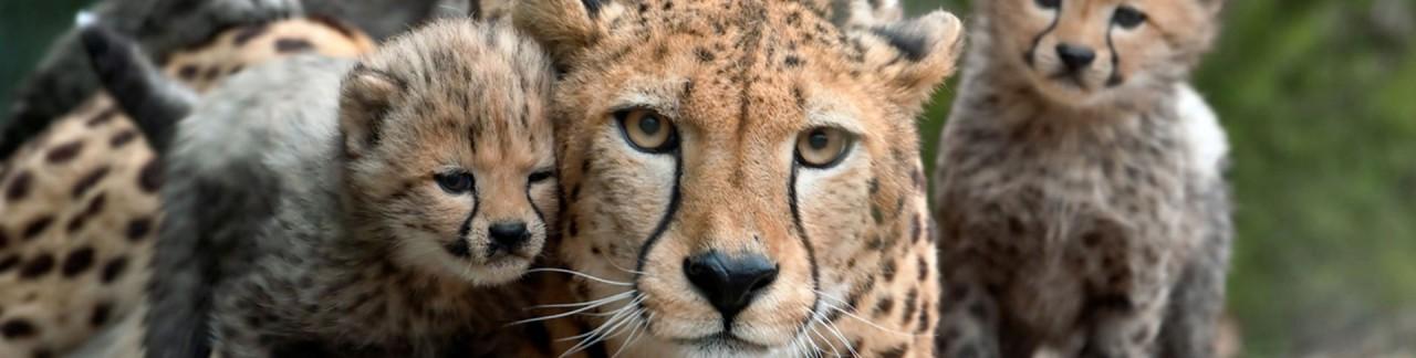 Burgers Zoo is een vorstelijke traktatie voor jong en oud!