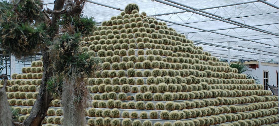 Cactus Oase Ruurlo Tuin
