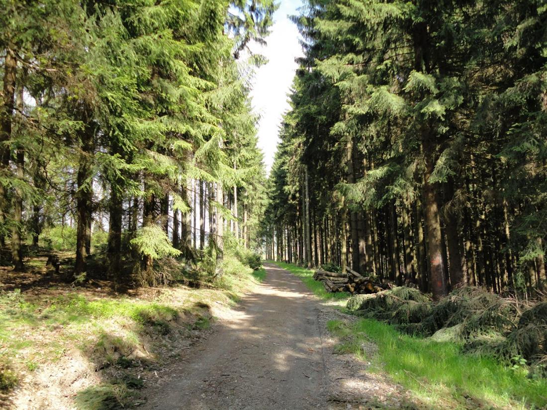 Weekendjeweg Duitsland Omgeving Bos