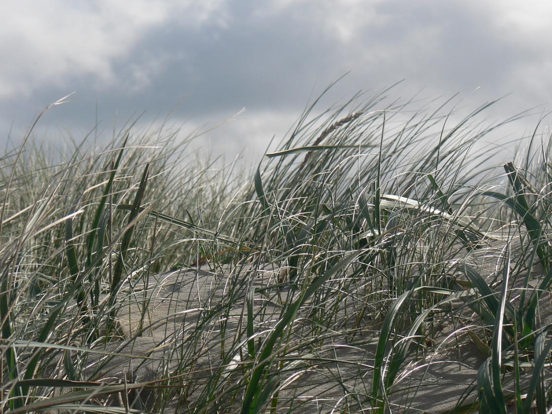 Resort land en zee scharendijke exterieur omgeving