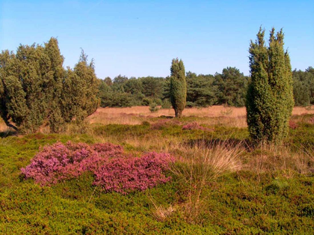Hotel Witteveen Drenthe Natuur