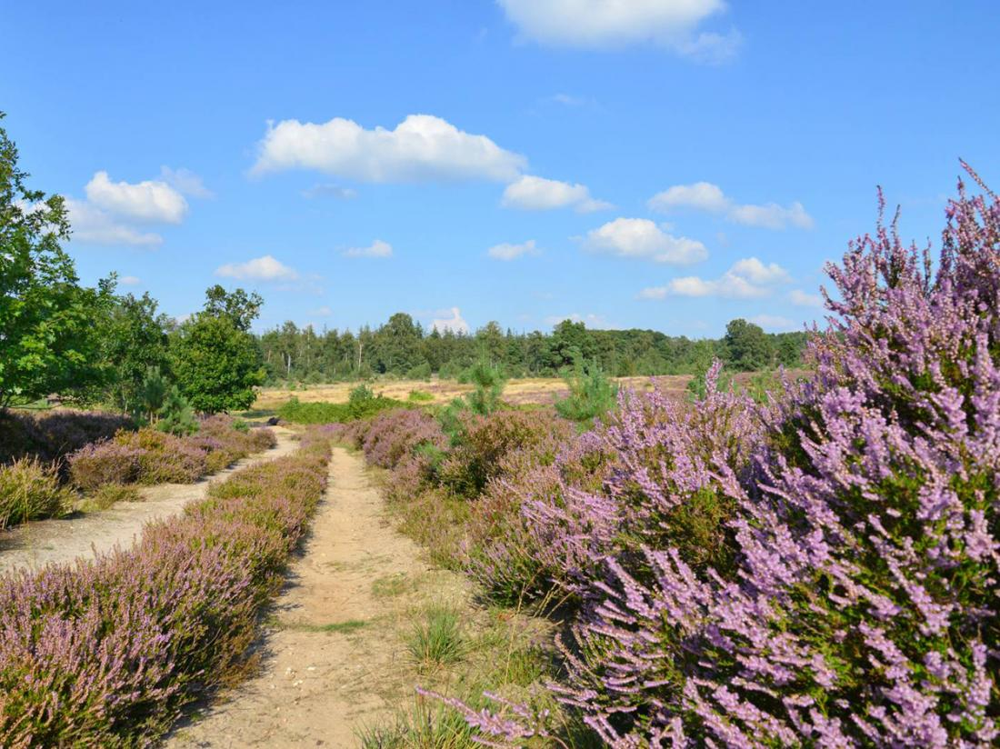 Landgoed de Uitkijk Hellendoorn Heide